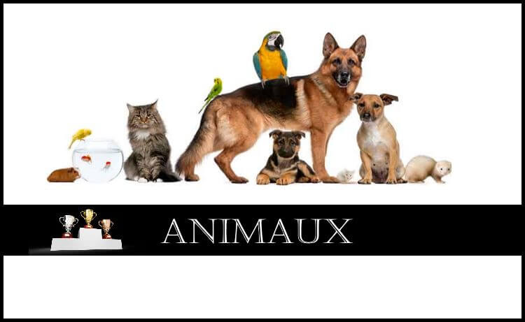 Comparatif : Animaux