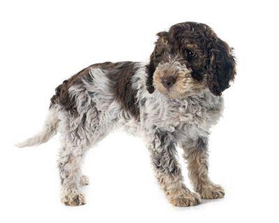 Quel est le meilleur harnais pour petit chien en 2018 ?