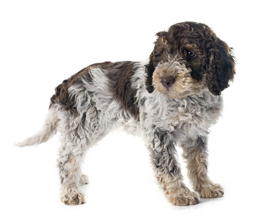 Meilleures poche de croquettes pour chien 2019