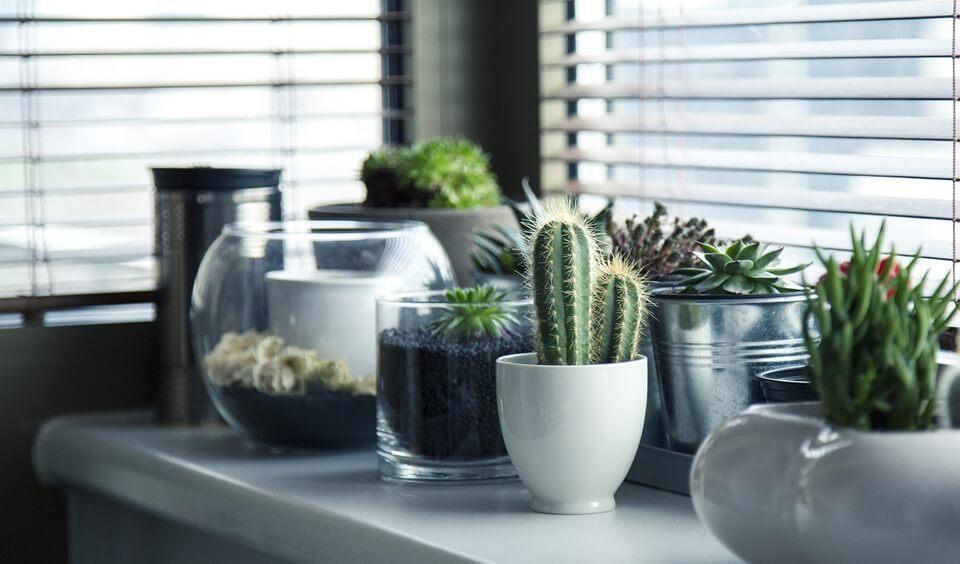 Les bonnes raisons d'adopter les jardins d'intérieur