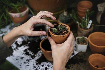 Potager : tout ce qu'il faut pour bien vous occuper de vos légumes