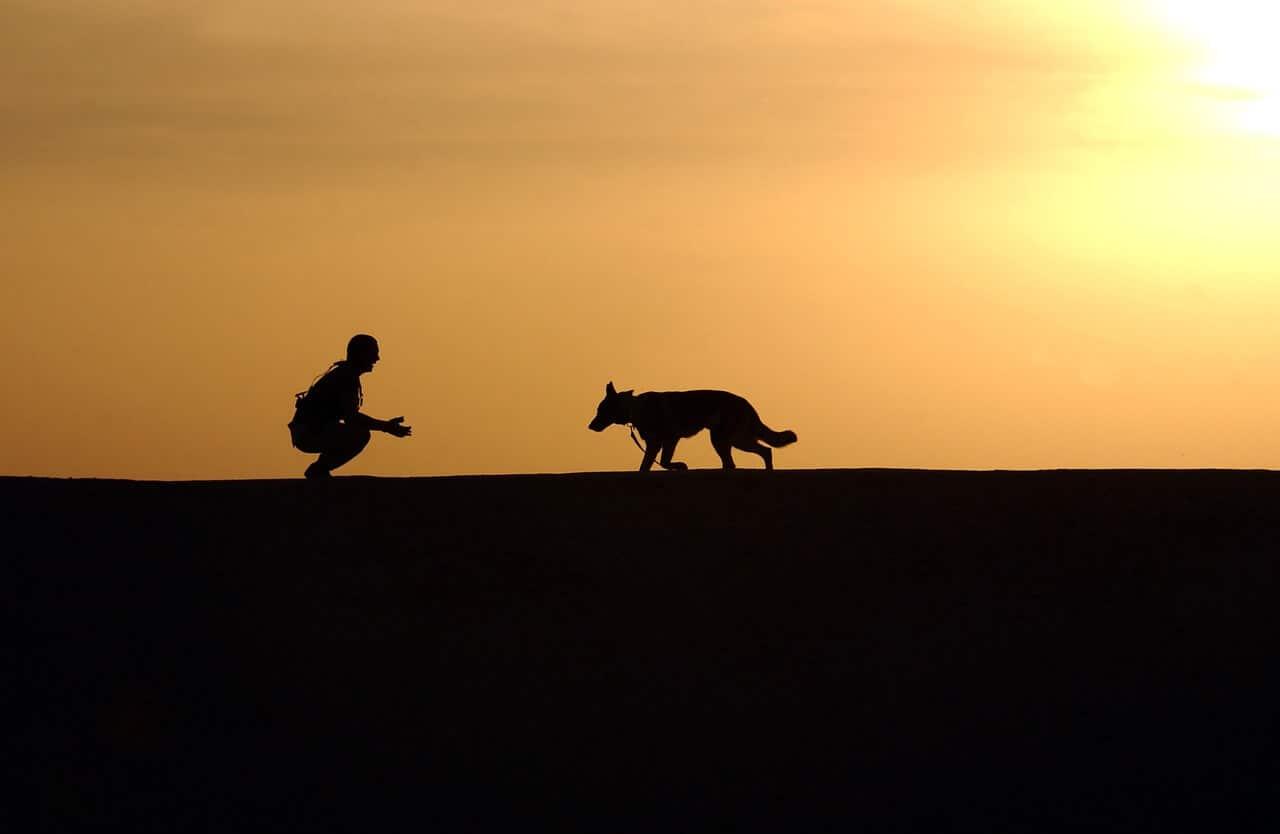 Education canine : techniques de dressage canin